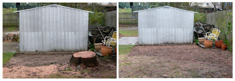 Stump grinding in brisbane backyard