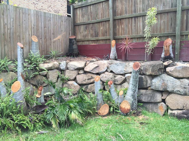 Palm Tree Stumps