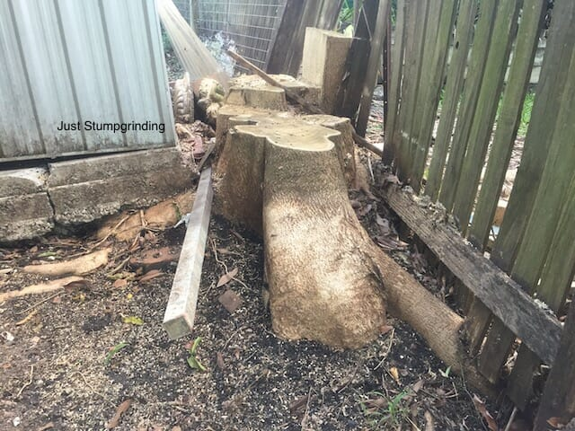 Brisbane Tree Stump In Between Fence