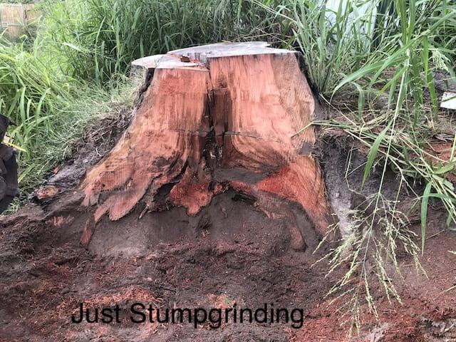 Inside of a tree stump in Ipswich